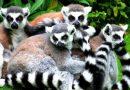 Мое путешествие на Мадагаскар. ЭПИЗОД 3